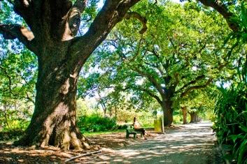 St_Vincent_Garden_-_Albert_Park