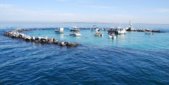moonraker-dolphin-swims