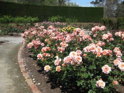 Alister Clark Memorial Rose Garden